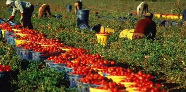 lavoratori nei campi