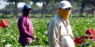 Lavoratori stranieri(foto www.lavorofisso.com)