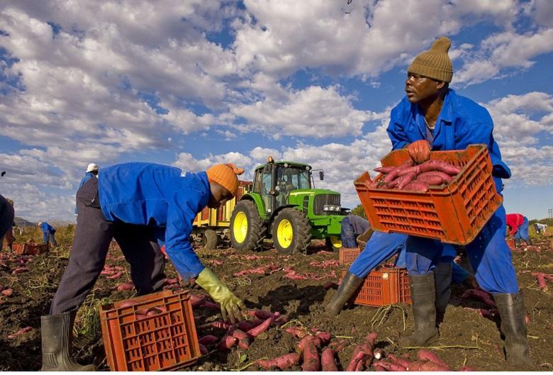 Regolarizzazioni la realtà del lavoro agricolo