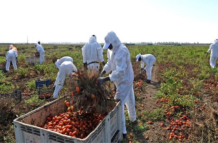 Regolarizzazioni - lavoratori migranti in Puglia. Fonte Quifinanza