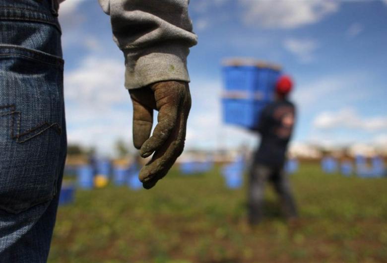 Caporalato e agromafie. Presentato il V Rapporto della Flai-Cgil. Fonte agricultura.it