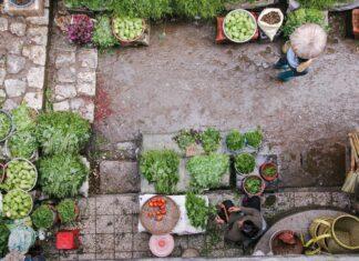 mercato di verdure
