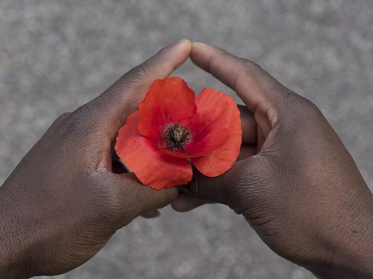 papavero rosso tre due mani