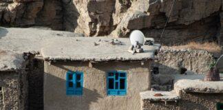 immagine dei talebani